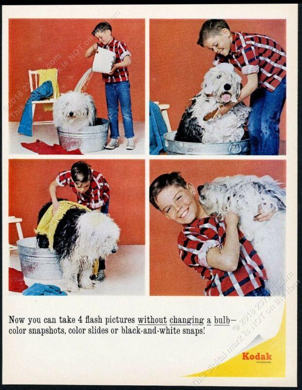 1966 Old English Sheepdog 4 photo in bath Kodak camera film vintage print ad