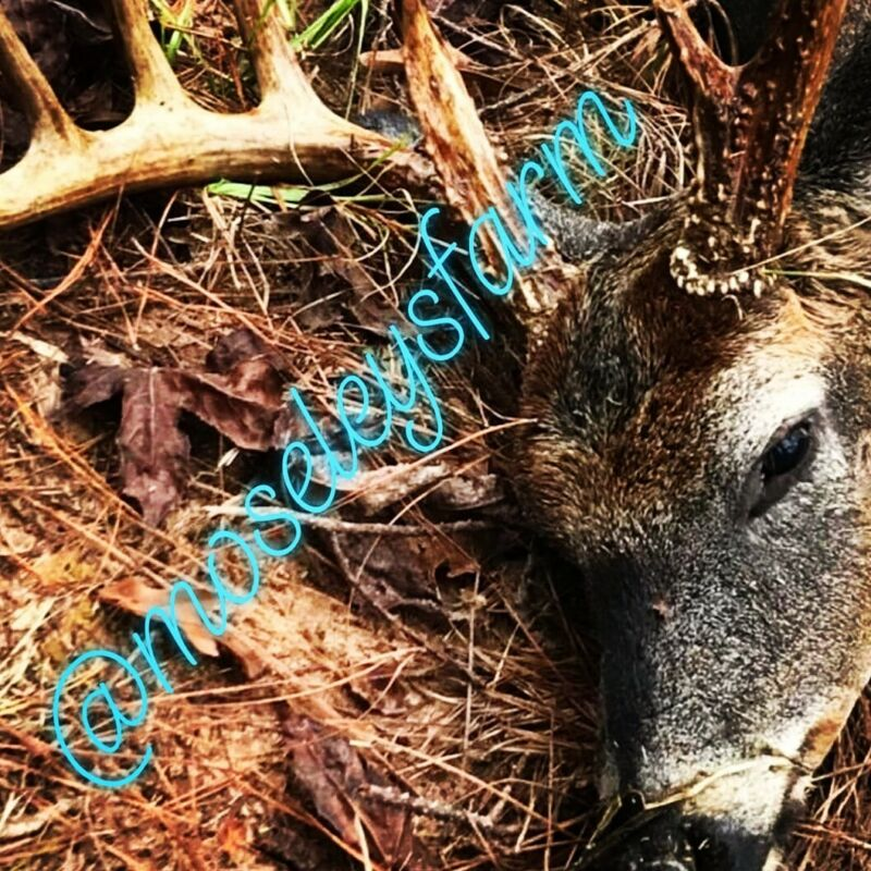 ALABAMA WHITETAIL DEER AND HOG SIMI GUIDED HUNT!!!