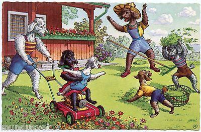 Fantaisie chiens. caniches. dogs. poodle. tondeuse à gazon. lawn mower