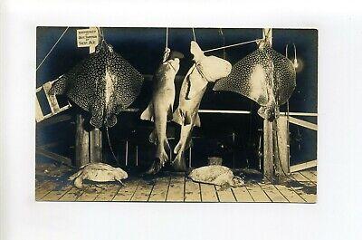 Miami Florida RPPC real photo postcard, fish harpooned, Capt Thompson, Yacht Ace