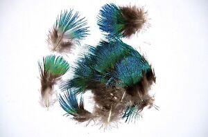 Peacock-Blue-Plumage-feathers-RARE-approx100-flytying-crafts-trimmings