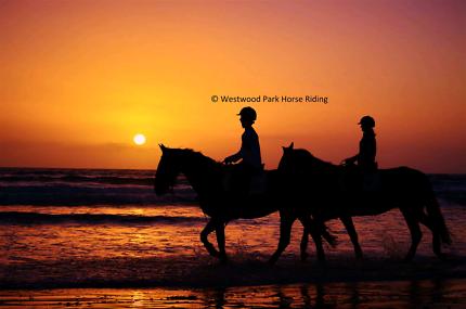 Aldinga Beach Horse Rides
