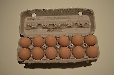 1 Dozen - Brown Ceramic Chicken Eggs Fake Dummy Eggs Train Your Hens