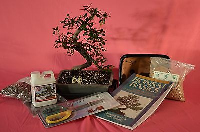 Bonsai Tree  Deluxe Starter Kits With 10 Years Old Chinese Elm