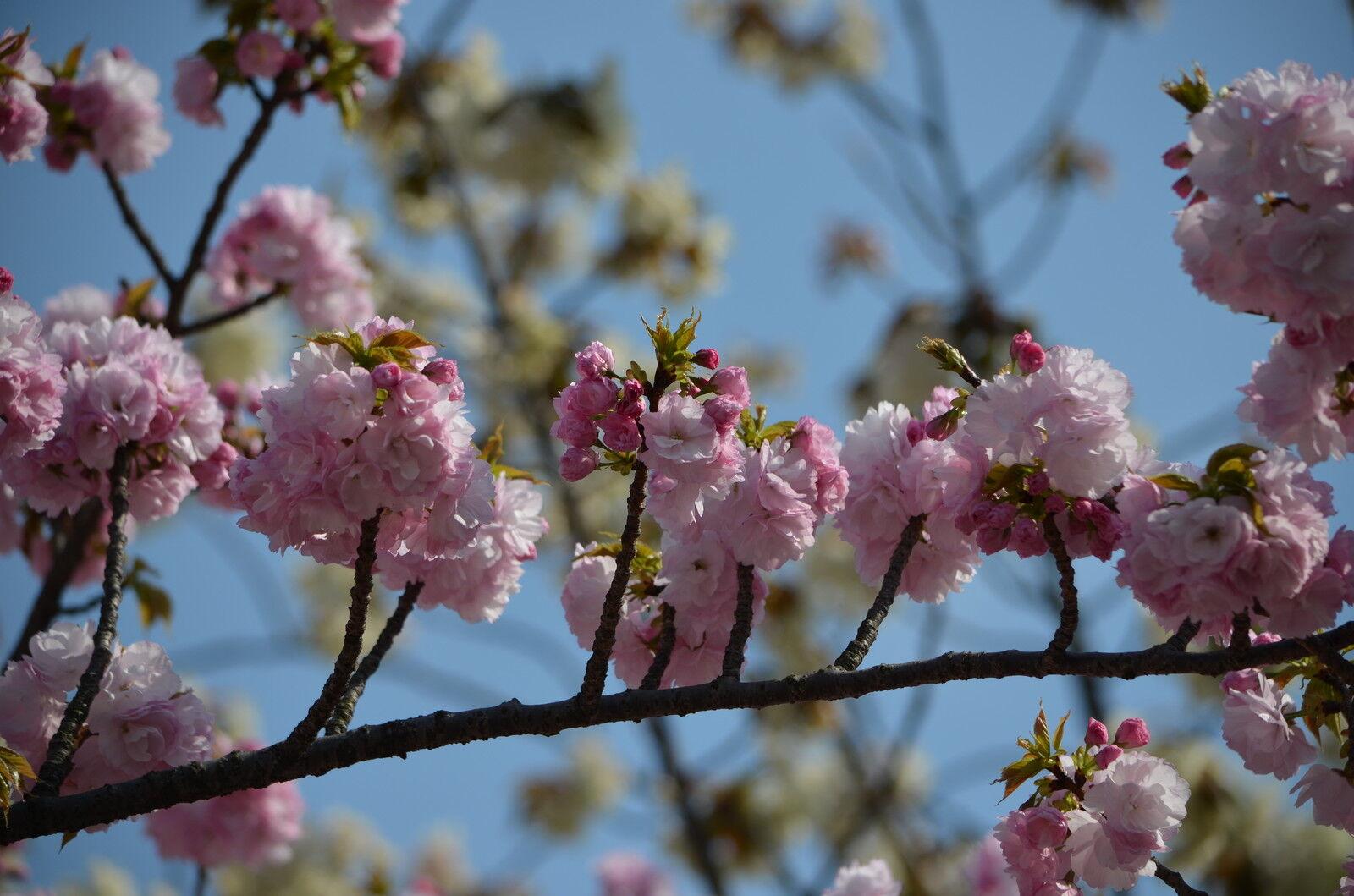 mars-japan