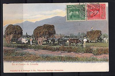 Chile En El Campo De Limache Used Ed  Kirsinger   Cia