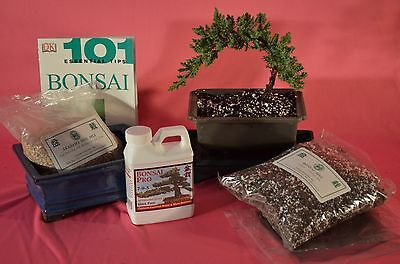 Bonsai Tree  Standard Starter Kits With 4 Years Old Japanese Juniper