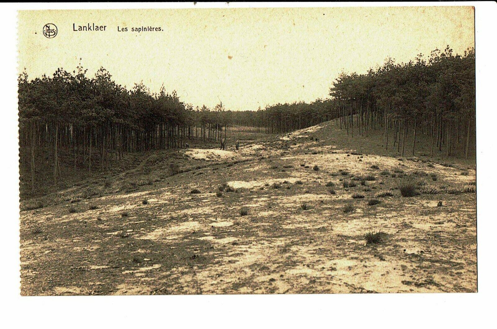 CPA - Carte postale-Belgique Lanklaer-Stockhelm -Les sapinières. VM4704