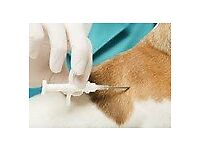 Pet Implanting / Microchipping