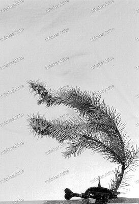Negativ-Tannenzweig-Pflanze-Tannenzapfen-Stillleben-1930er Jahre-1930s-3