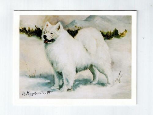 Standing Samoyed In Snow Notecards 6 Note Cards Envelopes By Ruth Maystead SAM-6