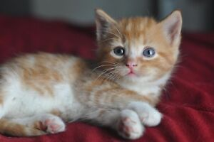 Magnifiques chatons/ adorables Kittens