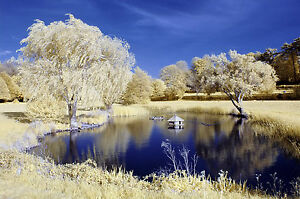 Nikon D70 infrared converted Camera 590nm Goldie Infrared Camera