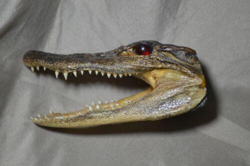 Vintage Alligator Head Red Eyes