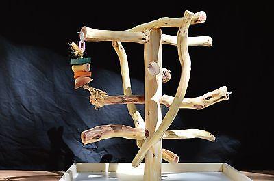Manzanita Parrot Tree Table Top Bird Toy Perch Play Gym like Java Wood SB-24TT