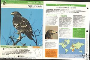 "Aigle pomarin Clanga pomarina - Lesser Spotted Eagle FICHE OISEAU BIRD - France - PORT GRATUIT A PARTIR DE 4 OBJETS BUY 4 ITEMS AND WORLDWIDE SHIPPING IS FREE EXCEPT USA, CANADA, AMERICA ONLY TRACKING MAIL FICHE TECHNIQUE, SPECIFICATION SHEET PAPIER GLACÉ, GLAZED PAPER RECTO-VERSO FORMAT 35 CM X 23,5 CM SIZE : 12.06"" X 8.28""  - France"