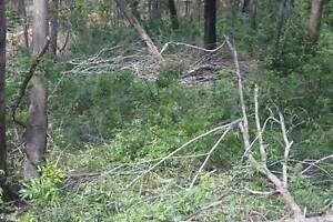 Lantana Removal, Slashing and Land Clearing