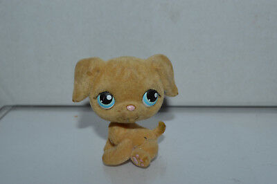 Littlest Pet Shop~#320~Golden Retriever~Puppy Dog~Beige Fuzzy~Blue Dot Eyes