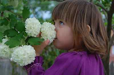 girl with hydrangea.