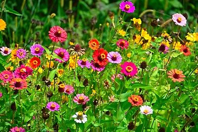 Serendipity's Butterfly Garden Wildflower seed Mix Lots of Color! Bulk -