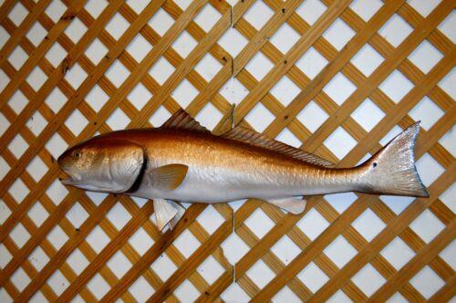 "42"" Redfish Half Mount"