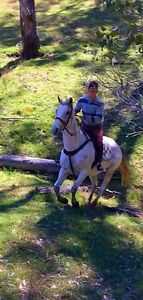 Fun, safe, jumper/all rounder Windsor Hawkesbury Area Preview