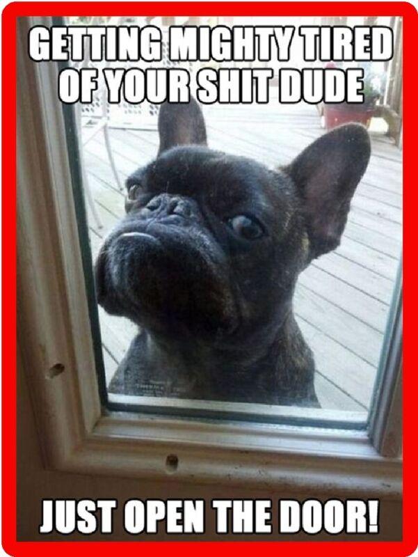 Funny Dog Humor Mad French Bulldog Refrigerator Magnet