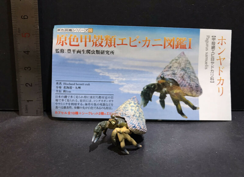 Yujin Takara Kaiyodo Retired Japan Exclusive Banded Hermit Crab Figure