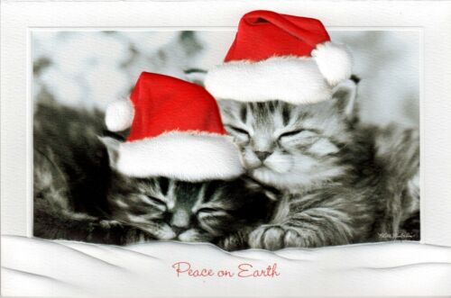 16 Embossed Boxed Christmas Cards Domestic Cats Sweet Slumber
