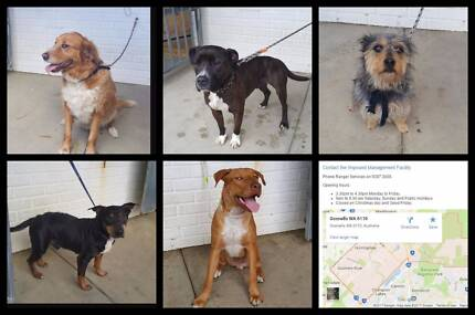 Wanted: Found pets - GOSNELLS & surrounding areas