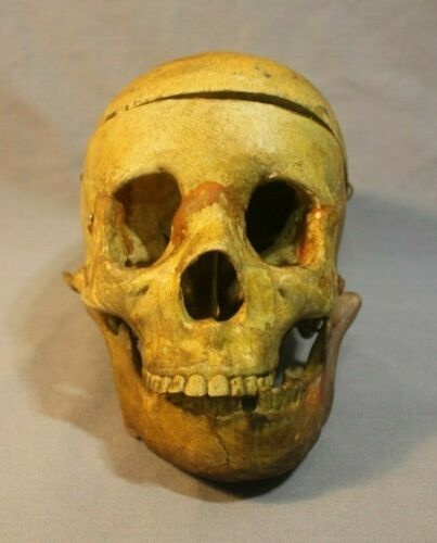 Beautiful aged antique or vintage medical school Human Skull death oddity gothic