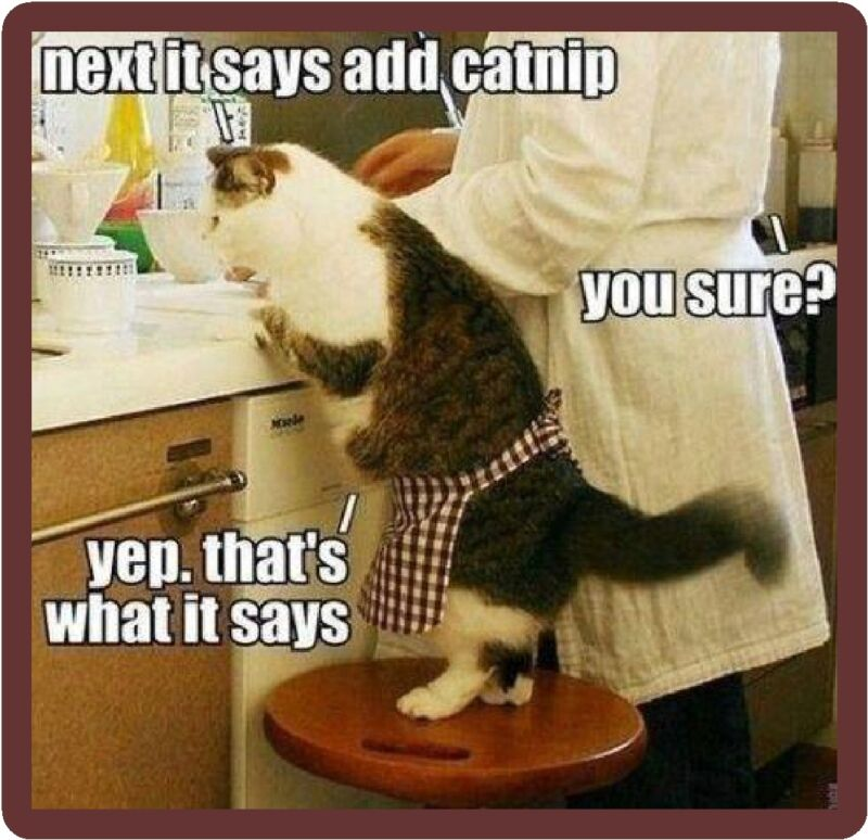 Funny Cat Humor Cat Helping In Kitchen Refrigerator Magnet