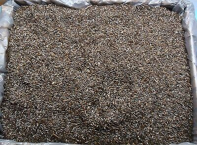 Thistle Seed -  Wild Bird /Finch Feed 3 Pounds Fast/Free Priority Shipping