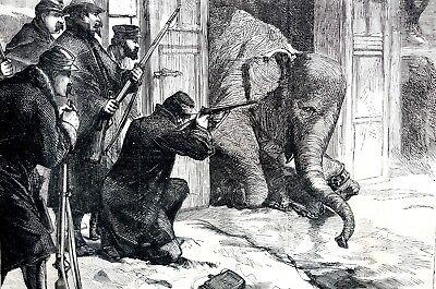 Jardin Des Plantes 1871 SHOOTING ELEPHANT for FOOD Paris Siege Antique Print