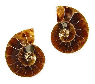 Ammonite Cufflinks - Groomsmen Gift - Men's Jewelry - Handmade - Gift Box