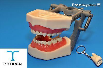 Dental Pediatric Typodont Model 760 Works With Columbia Brand Teeth