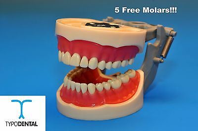 Dental Typodont Model 200 Works With Kilgore Brand Teeth 5 Free Molars