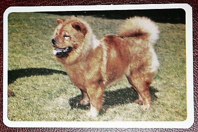 CHOW CHOW   Chinese Edible Dog     Vintage Colour Photo Card