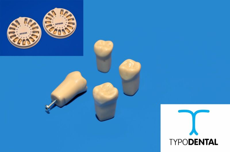 TYPODONT TEETH REPLACEMENT FOR 200 (FULL SET) Similar Nissin Kilgore Brand Type