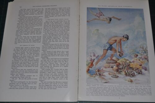1938 magazine article, THE BOTTOM OF A SOUTH SEA PEARL LAGOON, diving, color art