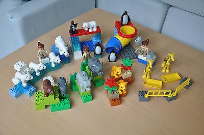 LEGO Duplo Ville Polartiergehege, Zoo und Tierbabys