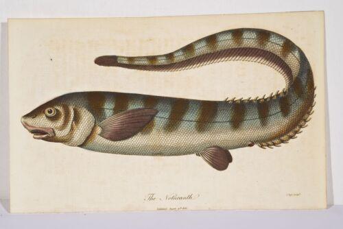 beaucoup de poissons dans la mer datant