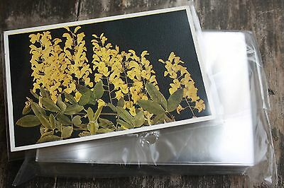 H3 100 Ansichtskarten Postkarten Folien Hüllen PREMIUM HART 149x101 für alte AK