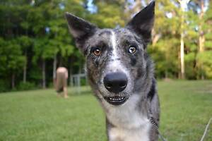 Need a dog sitter. $75 for 3 nights. Mackay Mackay Mackay City Preview