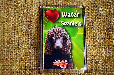 Water Spaniel Gift Dog Fridge Magnet 77x51mm Free UK Post Birthday Gift
