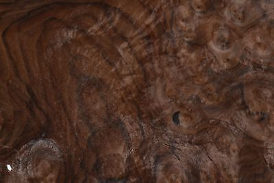 Walnut Burl Raw Wood Veneer Sheets 11.5 X 17 Inches 142nd Thick   7369-27