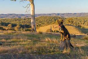 """Accountant says """"Sell the Property"""" Murrumbateman Yass Valley Preview"""