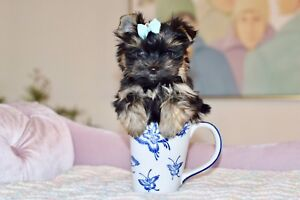 Le plus petit et le plus beau Micro Tea-Cup Yorkshire