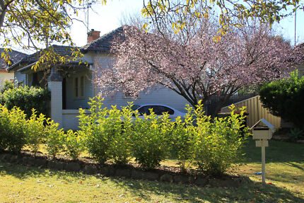 Charming Cottage in Windsor Windsor Hawkesbury Area Preview