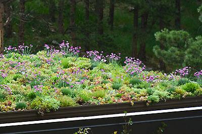 Sedum-Blumen-Kräuter 2.500+ Samen - Blühende Dächer - Dachbegrünung -Steingarten